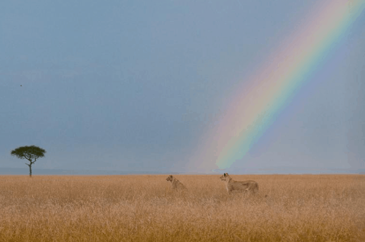 Unique Photos Of Rainbows That Will Blow Your Mind