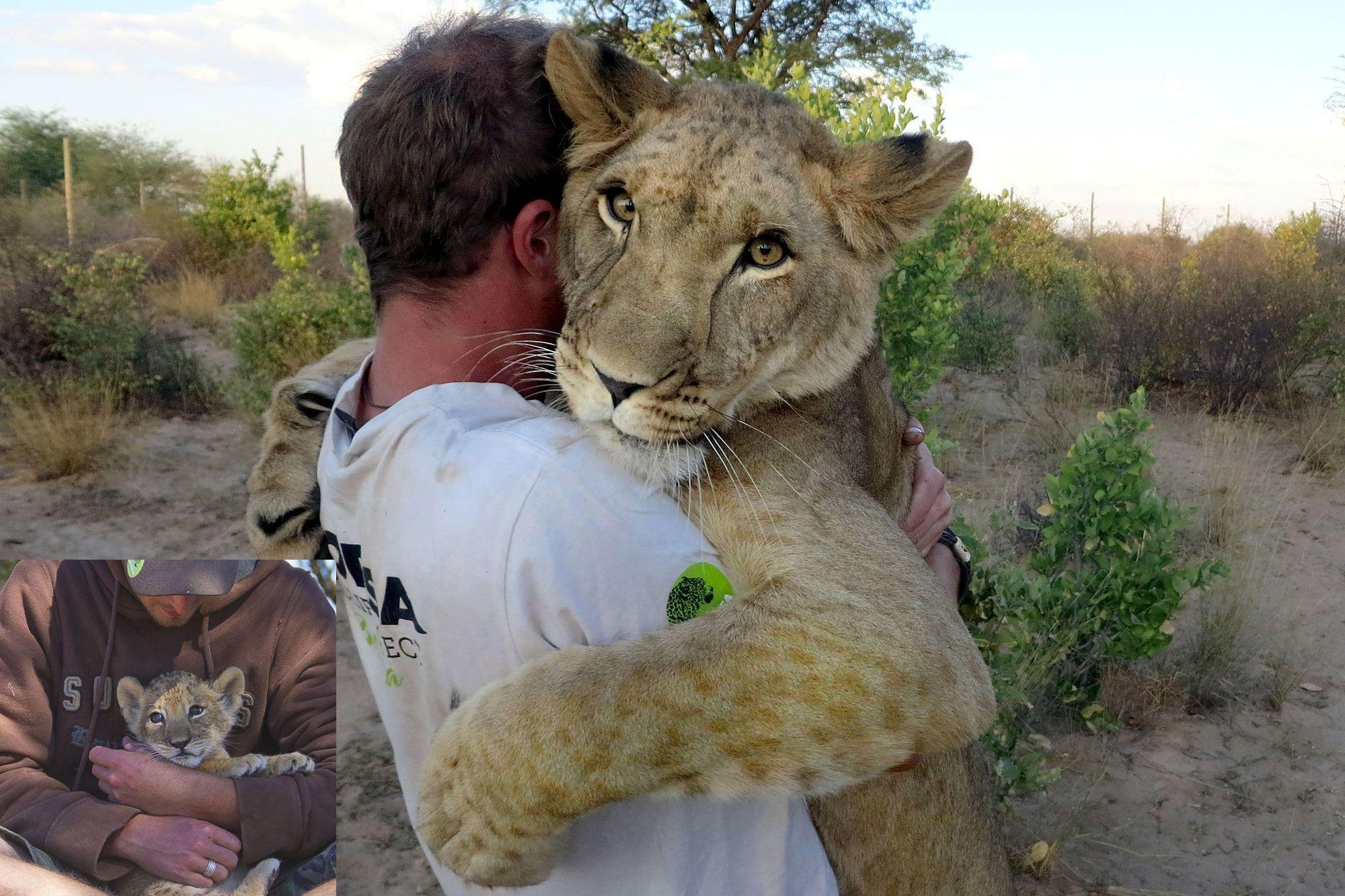 Lioness Reunites With Trainer After Years Apart: Her Response Will Surprise You!