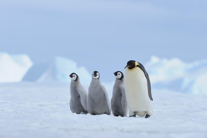 Top Most Breathtaking Winter Wonderlands In The World