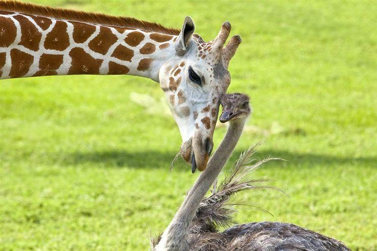23 Most Unexpected Animal Friendships That Will Melt Your Heart
